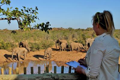 Jobb frivillig med Natur & Miljø på savannen i Sør-Afrika