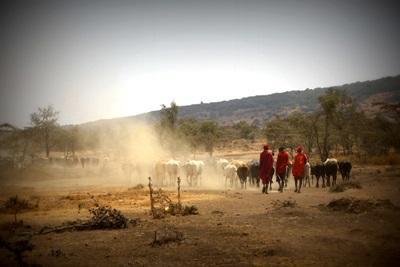 Frivillig arbeid med et tradisjonelt masaisamfunn i Tanzania
