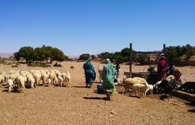 To nomadekvinner med familiens sauer på nomadeprosjektet i Marokko