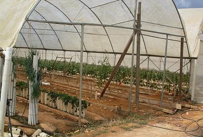 Gård hvor frivillige på landbruk- og lokalsamfunnprosjektet på Jamaica jobber