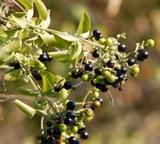 Blomsterarter på natur- og miljøprosjektet i Sør-Afrika