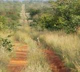 Gressarter på natur- og miljøprosjektet i Sør-Afrika