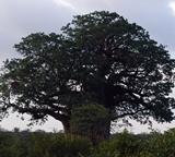 Ulike tresorter på natur- og miljøprosjektet i Sør-Afrika