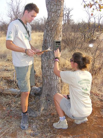 Frivillige undersøker et tre på natur- og miljøprosjektet i Sør-Afrika