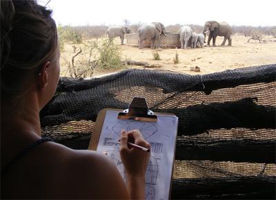 Frivillig  som observerer ville elefanter på safari på natur- og miljøprosjektet i Sør-Afrika