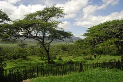 Projects Abroads natur- og miljøprosjekt i Kenya