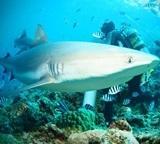 Frivilliges funn av fisk, hai, skilpadder og rokker på natur- og miljøprosjektet i Thailand