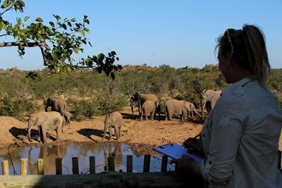 Projects Abroad frivillig identifiserer elefanter på Natur & Miljø-prosjektet på Wild at Tuli reservatet i Sør-Afrika