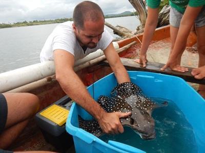 Mannlig frivillig som gjør undersøkelser på natur- og miljøprosjektet på Fiji