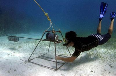 Frivillig på haibevaringsprosjektet som observerer livet under vann på Fiji