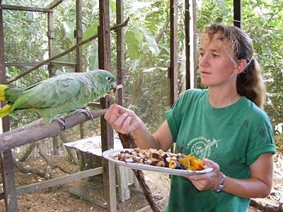 Frivillig på prosjektet for bevaring av dyreliv i Amazonasjungelen i Peru mater en papegøye
