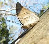 Natur- og miljøprosjekt i Costa Rica forskningsliste over sommerfugler