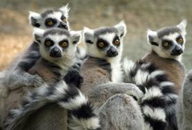 Frivillig arbeid Madagaskar
