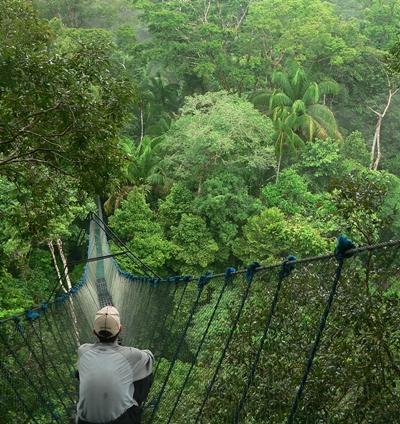 En frivillig sitter på den høyeste hengebroen i Sør-Amerika og observerer dyrelivet i Amazonas