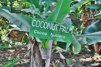 Frivillige praktiserer patois på Jamaica ved å lese gateskilt