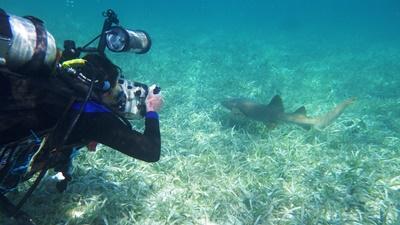 En dykker fotograferer en hai under vann i marinbevaringsarbeid