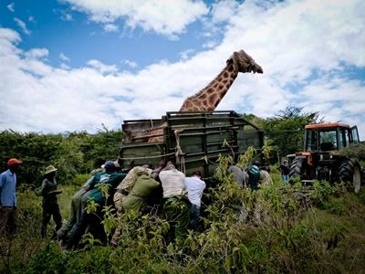 Frivillige på natur- og miljøprosjektet i Kenya på safari i en jeep