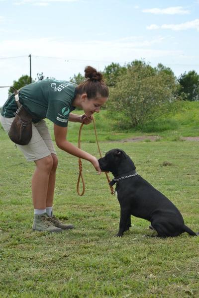 Frivillig trener opp en hund på Dyrestell-prosjekt i Argentina