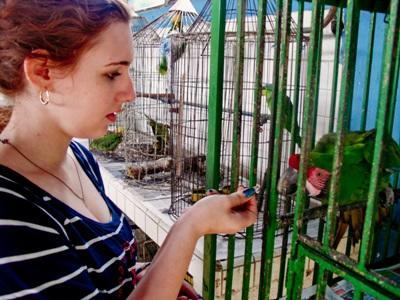 Frivillig mater en fugl i bur på rehabiliteringsenteret for dyr i Mexico