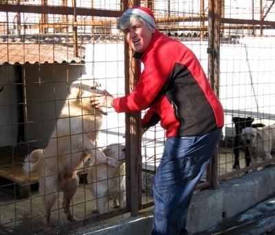 Frivillig behandler hunder i bur i Romania