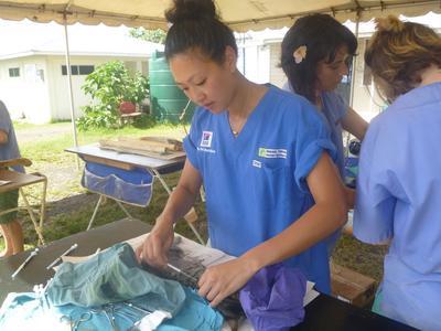 En veterinær steriliserer en katt med assistanse fra frivillige