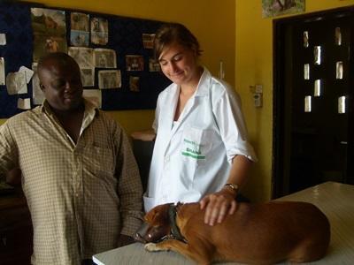 Student innen Veterinærmedisin jobber med en ansatt for å behandle en syk hund