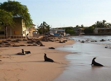 Volunteer in the Galapagos