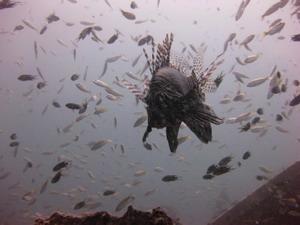 Frivillige observerer fisk under vann i Thailand