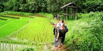 Frivillige besøker dyrkede marker under sitt opphold på et prosjekt med Projects Abroad i Thailand