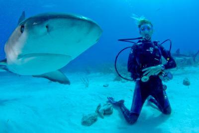 Frivillig poserer med hai under vann på Fiji